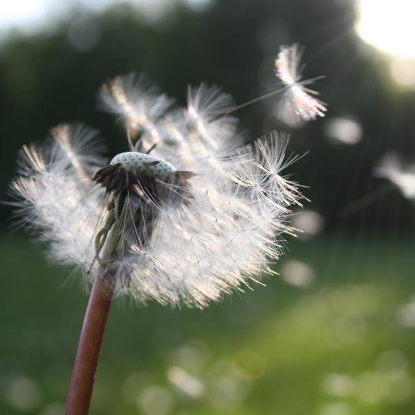 therapie rouwbegeleiding na verlies
